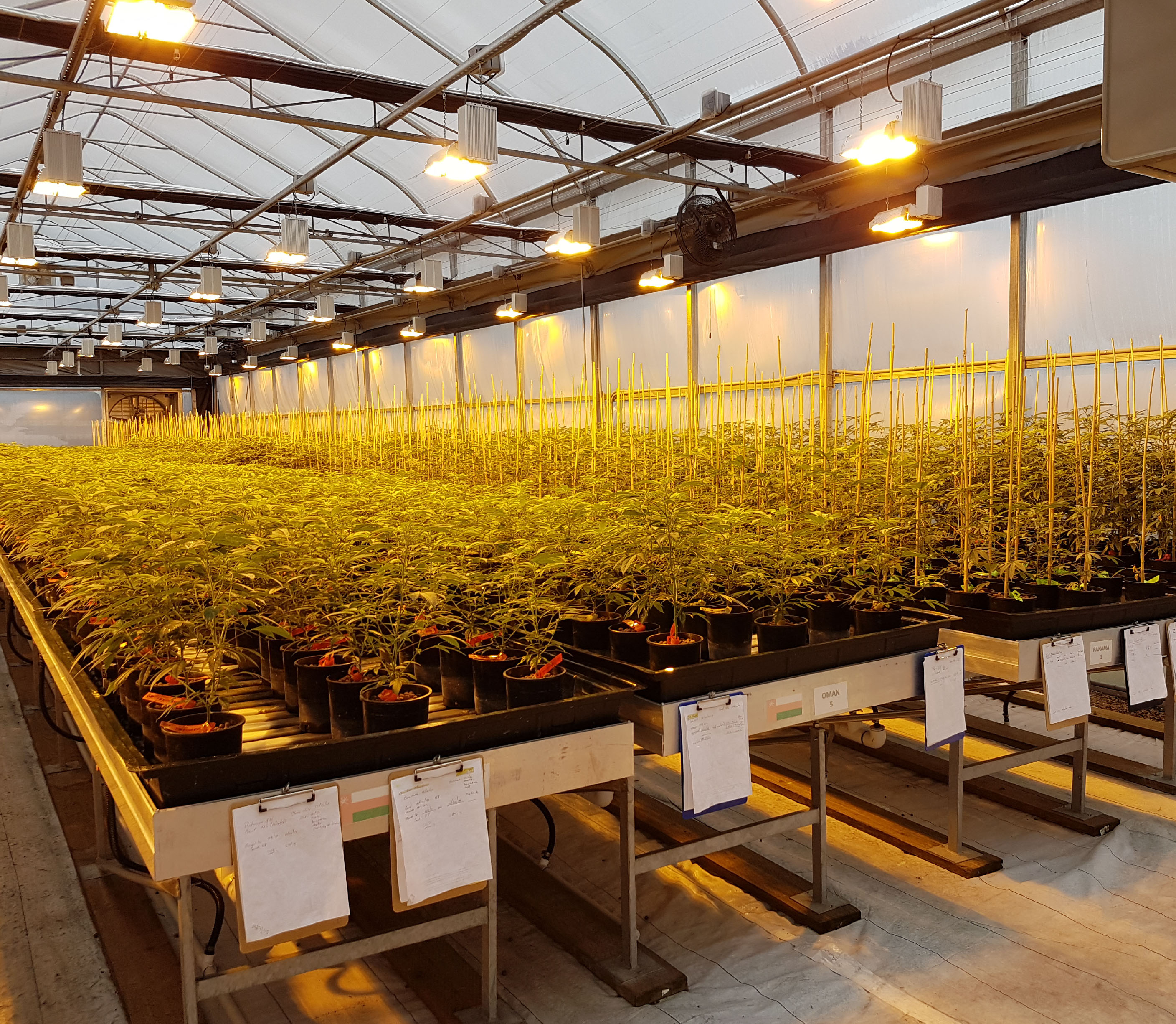 6 Ways To Outgrow Your Competitors In The Medical Cannabis Industry Commercial Greenhouse