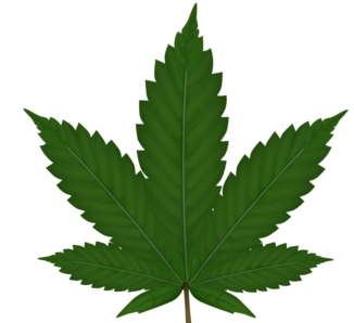 marijuana leaf denotes cannabis research