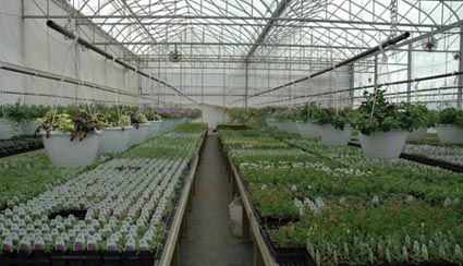 Grants for starting a greenhouse business