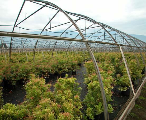 http://www.ggs-greenhouse.com/marijuana/Medical-Marijuana-MMJ-Cannabis-Growing-Warehouses-Greenhouses-Equipment