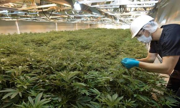 Marijuana Warehouse Production Ggs Structures Inc