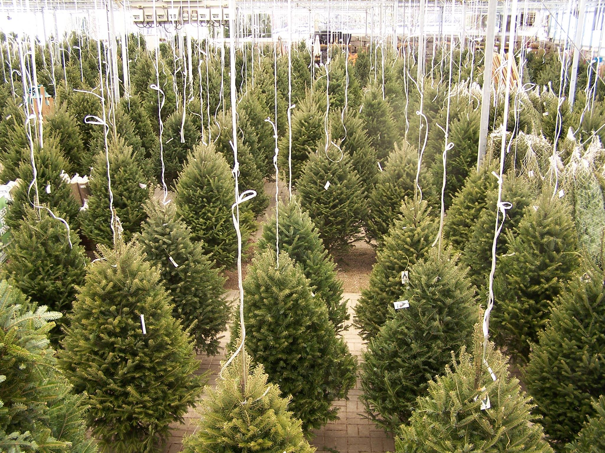 Make The Most Of The Holiday Season With These Ideas For Garden Centers And Nurseries Commercial Greenhouse Structures Systems Design Ggs