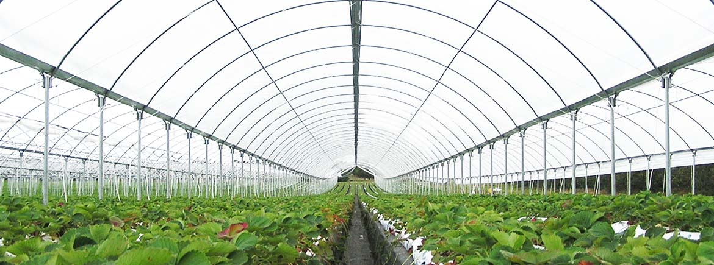 crop-protect.jpg