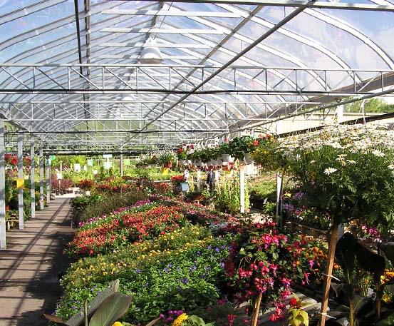 Curved Glass Greenhouses Produce Floriculture Marijuana
