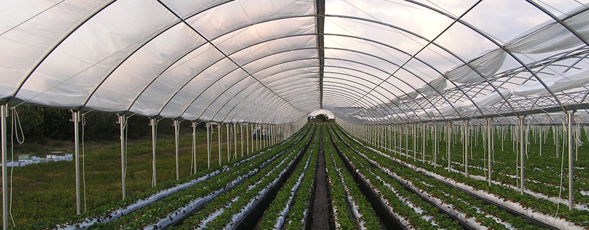 Protect Your Crops From The Elements With High Tunnel Crop