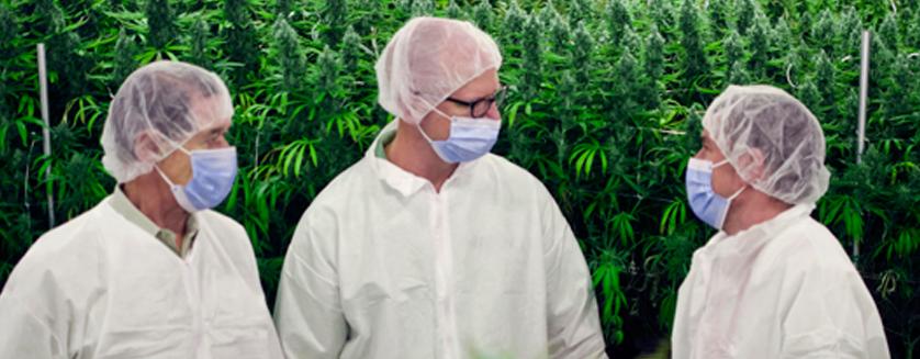 Colorado Rule Change Opens the Door for Wholesale Marijuana Growers