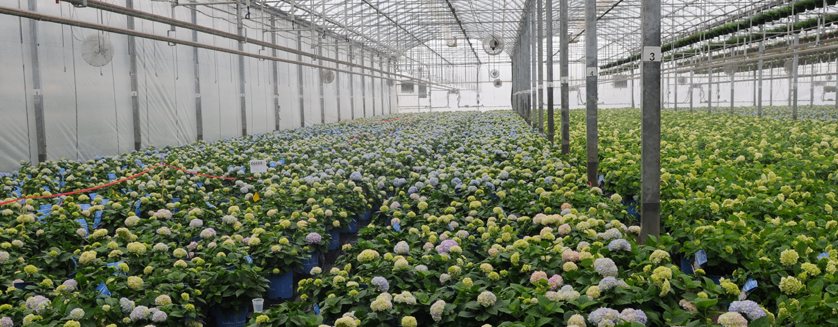 Agriculture Commercial Greenhouse Structures Systems