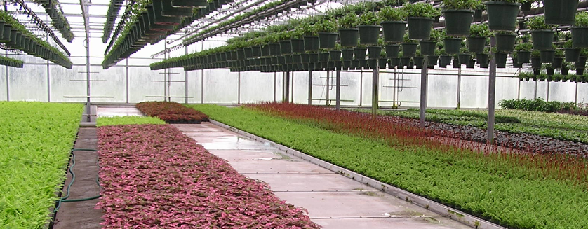 How To Bench A Commercial Greenhouse Commercial