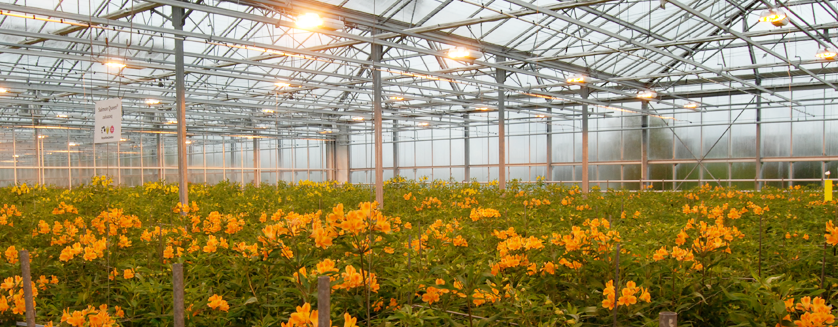 Choosing The Right Lighting For Your Greenhouse Commercial