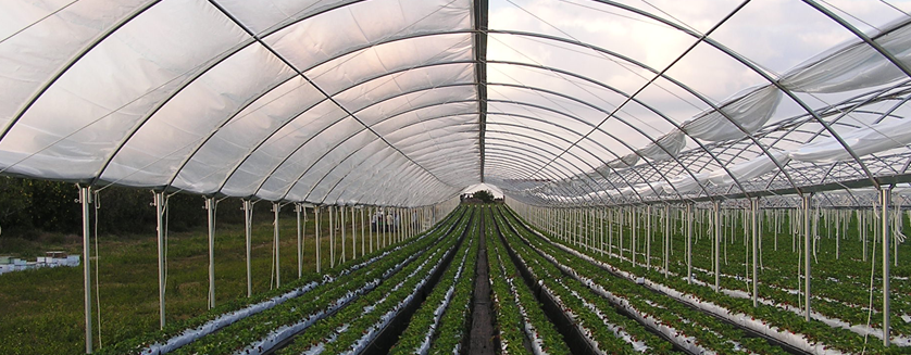 High Tunnels, Hoop Houses, Coldframes, Low Tunnels, and