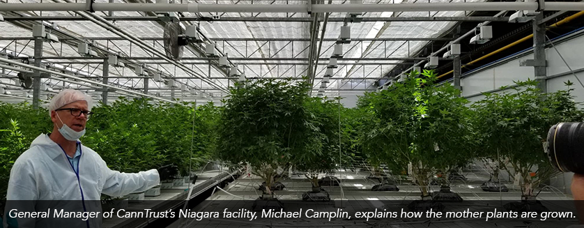 General Manager of CannTrust's Niagara facility, Michael Camplin, explains how the mother plants are grown.