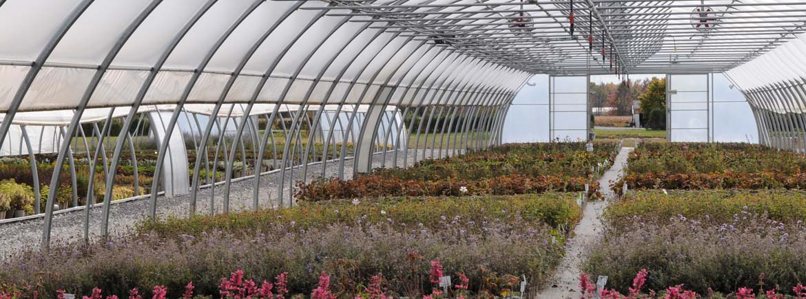 Freestanding Greenhouses Commercial Greenhouse