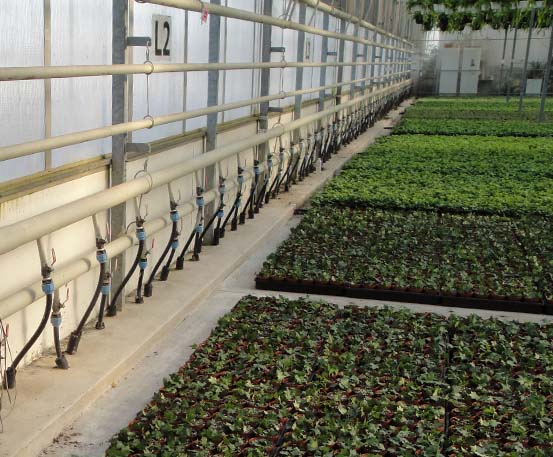 Niagrow Greenhouse Heating Systems Commercial Greenhouse