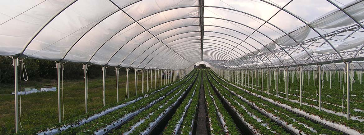 High Tunnel Crop Protector Commercial Greenhouse