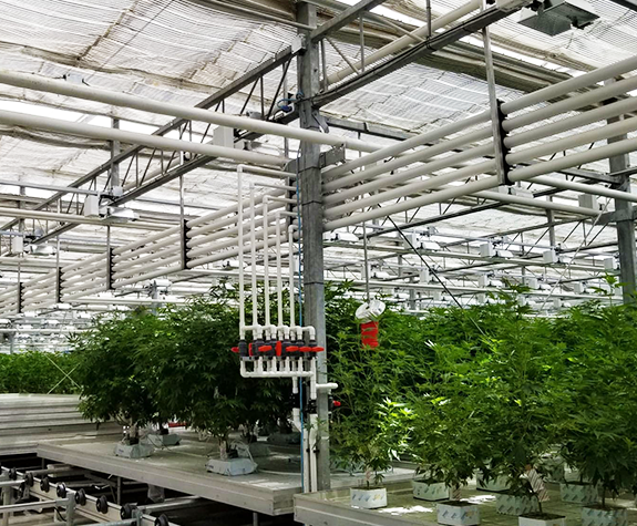 Marijuana Facility | Commercial Greenhouse Structures