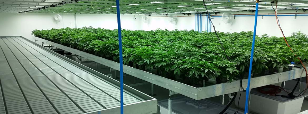 Marijuana Facility | Commercial Greenhouse Structures ...
