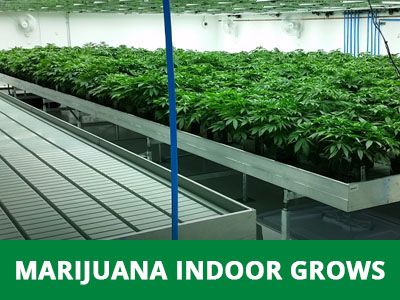 Medical Marijuana Greenhouse Indoor Cannabis Grow