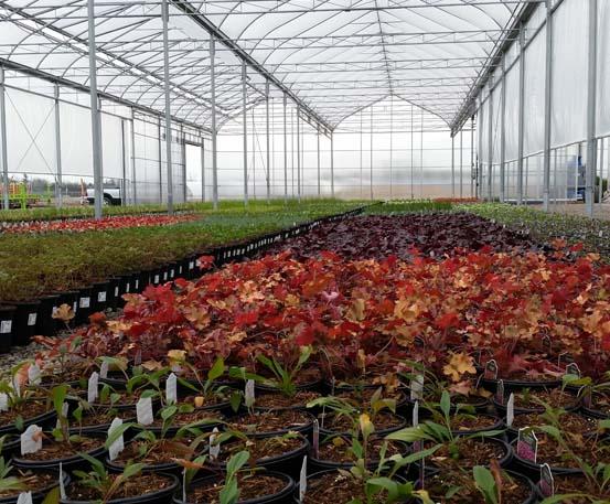 http://ggs-greenhouse.com/