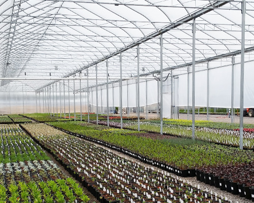 7 Proven Steps for Successfully Designing a Propagation Greenhouse