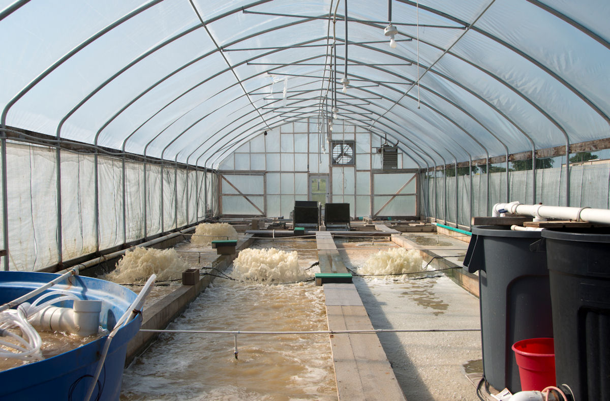 A New Type of Greenhouse Crop - Shrimp! | Commercial Greenhouse