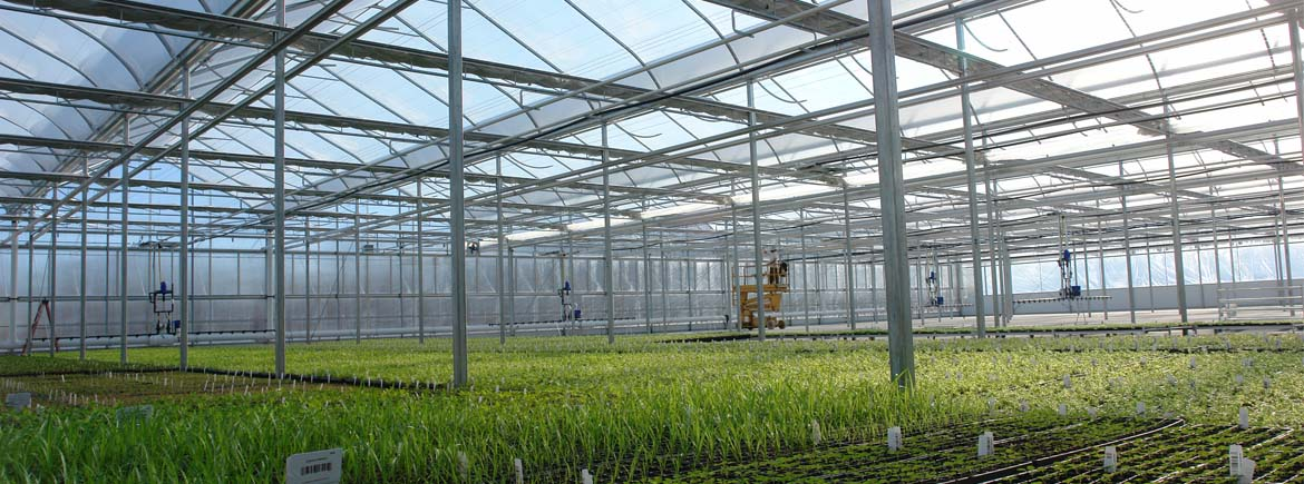 Commercial Greenhouse Structures, Design & Construction | GGS